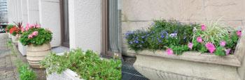 アサヒサウナ前と神戸信用金庫前花壇